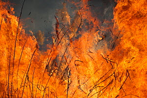 Wild fire in Marievale Bird Sanctuary, South Africa, June 2013  -  Richard Du Toit