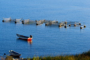 Floating setup with nets for trout breeding at lake Titicaca, Bolivia, October 2013.  -  Bert  Willaert