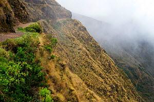 Path on the Yunga Cruz trail in a steep sided valley with low clouds, Precolumbian / Inca trail, Andes, Chunavi, Bolivia, November 2013.  -  Bert  Willaert