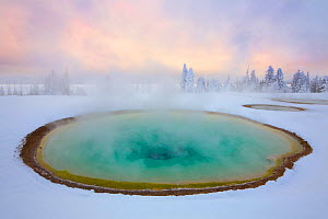 A hot spring in the West Thumb Geyser Basin, Yellowstone National Park, Wyoming. The colors are a result of thermophilic bacteria living in the hot springs. December 2010. - Floris  van Breugel