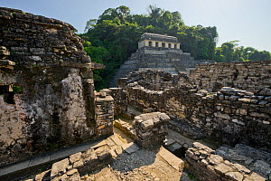 The Palenque Mayan ruins - Temple of the Inscriptions, seen from The Palace, Chiapas, Mexico. March 2014.  -  Floris  van Breugel