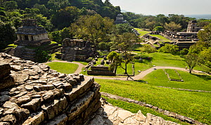 The Palenque Mayan ruins - Temple of the Cross (left), Temple of the Inscriptions (distant center), and The Palace (right), Chiapas, Mexico. March 2014.  -  Floris  van Breugel