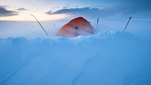 Snow blowing past tent camp at dawn, Dovrefjell - Sunndalsfjella National Park, Norway, January 2012.  -  Roy Mangersnes