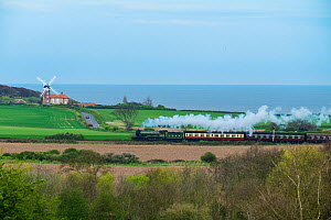 Steam train on the Heritage Poppy Line from Sheringham to Holt, with Weybourne Mill in background, Norfolk, UK, April.  -  Gary  K. Smith