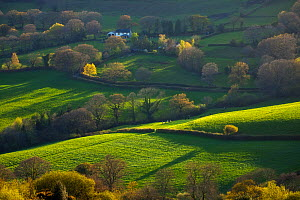 View across farmland in spring, Fishpond, Dorset, England, UK, April 2012.  -  Guy Edwardes / 2020VISION