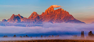 Dawn light on the Teton Mountain range, with fog shrouded conifers, Grand Teton National Park, Wyoming, USA, September 2012.  -  Jack  Dykinga