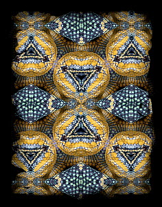 Kaleidoscope pattern formed from picture of Wagler's Temple Viper (Tropidolaemus wagleri) scales. Restricted for Editorial use until December 2015 - Michael  D. Kern