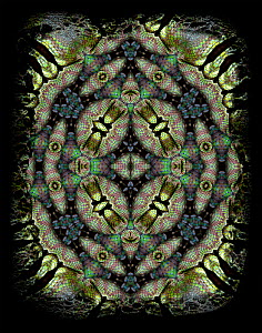Kaleidoscope pattern formed from picture of Popes Tree Viper (Trimeresurus popeorum) scales. Restricted for Editorial use until December 2015 - Michael  D. Kern