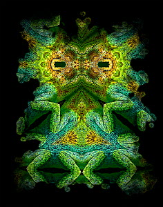 Kaleidoscope pattern formed from picture of Johnstons Chameleon (Chamaeleo johnstoni) face and legs. Restricted for Editorial use until December 2015  -  Michael  D. Kern