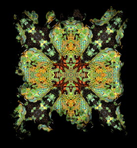 Kaleidoscope pattern formed from picture of Green Tree Python (Morelia viridis) face. Restricted for Editorial use until December 2015  -  Michael  D. Kern