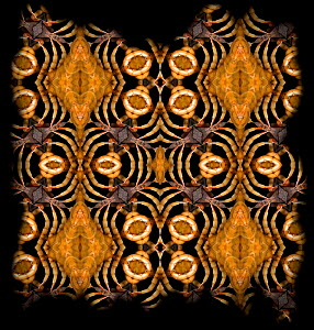 Kaleidoscope pattern formed from picture of Centipede (Chilopoda sp) EMBARGOED FOR NAT GEO UNTIL the end of 2015 - Michael  D. Kern