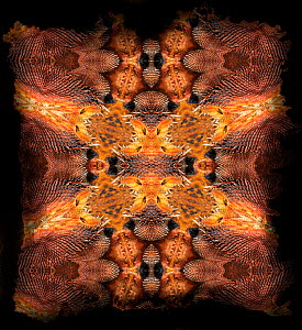 Kaleidoscope pattern formed from picture of Bearded Dragon (Pogona) scales, including scales from around ears.  -  Michael  D. Kern