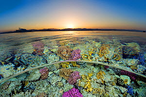 Split level view of shallow coral reef in the Red Sea at sunset. Gordon Reef, Sinai, Egypt. Strait of Tiran, Gulf of Aqaba, Red Sea. - Alex  Mustard