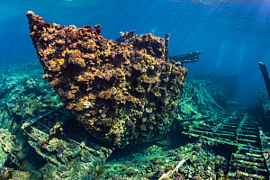 The bow of Chrisoula K wreck (also known as the tile wreck) Abu Nuhas, Egypt. Strait of Gubal, Gulf of Suez, Red Sea. - Alex Mustard