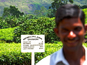 Indian man smiling, with sign for Tea (Camellia sinensis) plantation, Sri Lanka, March 2005. - Pal Hermansen