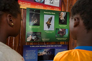 Local school children looking at displays and information on Straw-coloured fruit bats (Eidolon helvum). Kasanka Trust Education Centre and Museum, Kasanka National Park, Zambia. November 2013.  -  Nick Garbutt