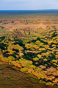 Aerial view of the distinct patch of 'Mushitu' (ever-green swamp forest) where millions of Straw-coloured fruit bats (Eidolon helvum) roost during the day. Kasanka National Park, Zambia. November 2013... - Nick Garbutt