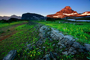 Rock outcrop running through alpine meadow, peak of Mount Reynolds in distance. Logan Pass, Glacier National Park, Rocky Mountains, Montana, July 2010. - Thomas Lazar