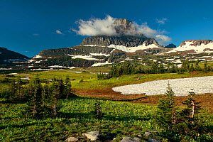 Clouds surrounding top of Mount Reynolds above a distant herd of bighorn sheep (Ovis canadensis) in alpine meadow. Logan Pass, Glacier National Park, Rocky Mountains, Montana, July 2010. - Thomas Lazar