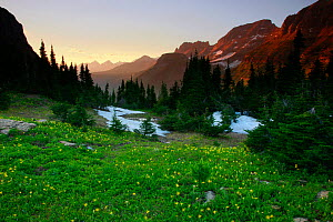 Alpine meadow filled with yellow glacier lillies at dusk, Garden Wall in distance. Logan Pass, Glacier National Park, Rocky Mountains, Montana, July 2010. - Thomas Lazar