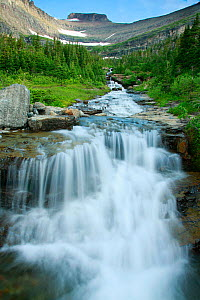 Water rushing down alpine stream, Logan Pass, Glacier National Park, Rocky Mountains, Montana, July 2010. - Thomas Lazar