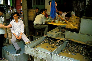 Terrapins for sale as food in Chinese market, Canton / Guangzhou province, China. - Roland  Seitre