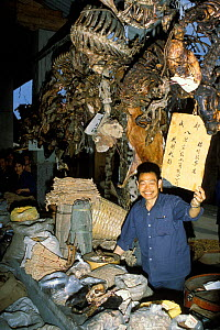 Animal parts for sale in market for traditional Chinese medicine, Chengdu, Sichuan Province, China. - Roland  Seitre
