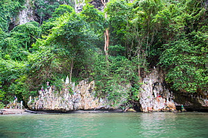 Cave of the Virgin Mary with statues of the Virgin Mary on ledges, Morocoy National Park, Gulf of Cuare, Chichiriviche, Caribbean Coast, Venezuela, February 2014. - Christophe Courteau