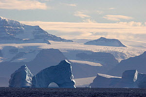 Icebergs floating by the heavily glaciated south coast of Scoresbysund Fiord, East Greenland.  -  Bryan and Cherry Alexander