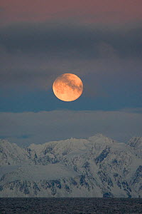 Moonrise over the coast of Eastern Spitsbergen with snow on the mountains. Svalbard, Norway, September. - Bryan and Cherry Alexander