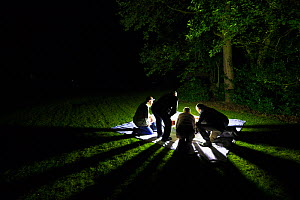 Moth trapping, The National Forest, Leicestershire, UK. September 2013.  -  Alex  Hyde