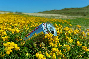 Discarded drinks can in clump of Bird�s-foot-trefoil (Lotus corniculatus), Holkham dunes, Norfolk, UK, July.  -  Ernie  Janes