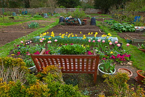 Garden allotment with spring flowers, UK, April. - Ernie  Janes