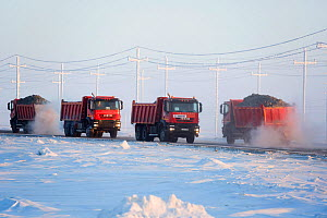 Trucks carrying sand for construction in the South Tambey Gas Field, Yamal Peninsula, Siberia, Russia. February 2014. - Bryan and Cherry Alexander