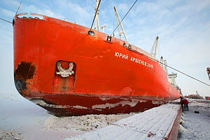 A Russian ice strengthened ship, Yuri Arshevsky, delivers her cargo to Sabetta during the winter. Yamal Peninsula, Siberia, Russia. February 2014.  -  Bryan and Cherry Alexander