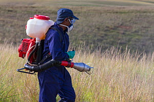 Food and Agriculture Organization (FAO) locust control operation. Spraying insecticides on the ground to kill Migratory locust (Locusta migratoria capito) nymphs. Ground control operations are necessa... - Ingo Arndt