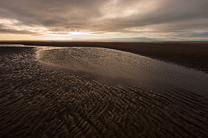 Coast at low tide with ripples / patterns in sand, Lake Clark National Park, Pacific, Cook Inlet, Alaska, USA. June 2013.  -  Ingo Arndt