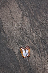 Patterns and clam in sand on beach, Pacific Coast, Cook Inlet, Lake Clark National Park, Alaska, USA. June 2013.  -  Ingo Arndt