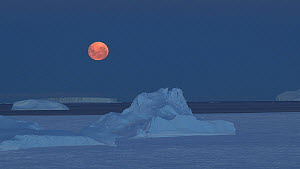Timelapse of the moon, with icebergs and sea ice in the foreground, Antarctica.  -  Fred  Olivier