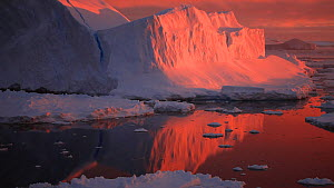 View of icebergs and pack ice at sunset, seen from a moving boat, Antarctica. - Fred  Olivier