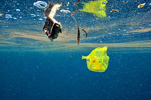 Plastic bag and other rubbish floating in the sea, this is waste from the city of  Manado, Indonesia. Sulawesi Sea. - Pascal Kobeh
