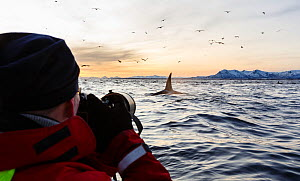 Tourist photographing killer whales / orcas (Orcinus orca) on 'Whale Safari'. Andfjorden, close to Andoya, Nordland, Northern Norway.  January 2014. - Espen Bergersen