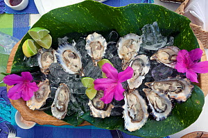 A plate of oysters on ice ready to eat,  Santa Catarina State, Brazil. - Angelo Gandolfi