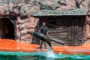 California sea lion (Zalophus californianus) jumping through hoop held by trainer during show, Cabarceno Natural Park, Penagos, Cantabria, Spain, May 2014. Captive, occurs in Canada, Mexico and the Un... - Philippe Clement