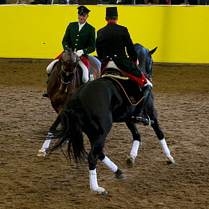 Marbach riders in traditional uniform perform during the stud's 500th anniversary celebrations, Marbach National Stud, Swabian Alps, near Reutlingen, in Baden-Wurttemberg, Germany. May 2014.  -  Kristel  Richard