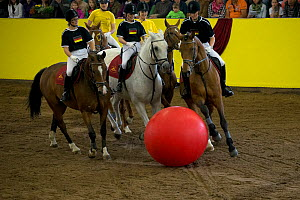 The German national team and the Marbach team play equestrian football during the stud's 500th anniversary celebrations. Marbach National Stud, Swabian Alps, near Reutlingen, in Baden-Wurttemberg, Ger...  -  Kristel  Richard