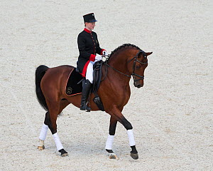 A member of Marbach's Quadrille team in traditional uniform, mounted on a Wurttemberg horse during the stud's 500th anniversary celebrations. Marbach National Stud, Swabian Alps, near Reutlingen, in B...  -  Kristel  Richard