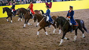 Marbach's Quadrille in traditional uniform, mounted on Wurttemberg horses, performing during the stud's 500th anniversary celebrations. Marbach National Stud, Swabian Alps, near Reutlingen, in Baden-W...  -  Kristel  Richard