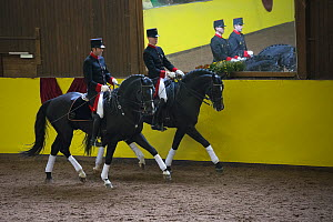 Marbach riders in traditional uniform, riding Wurttemberg stallions during the stud's 500th anniversary celebrations. Marbach National Stud, Swabian Alps, near Reutlingen, in Baden-Wurttemberg, German...  -  Kristel  Richard