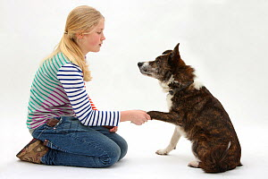 Girl shaking hands with mongrel dog. Model released - Mark Taylor
